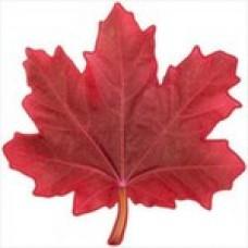 Кленовый Лист (Красный) / Maple Leaf (Red)